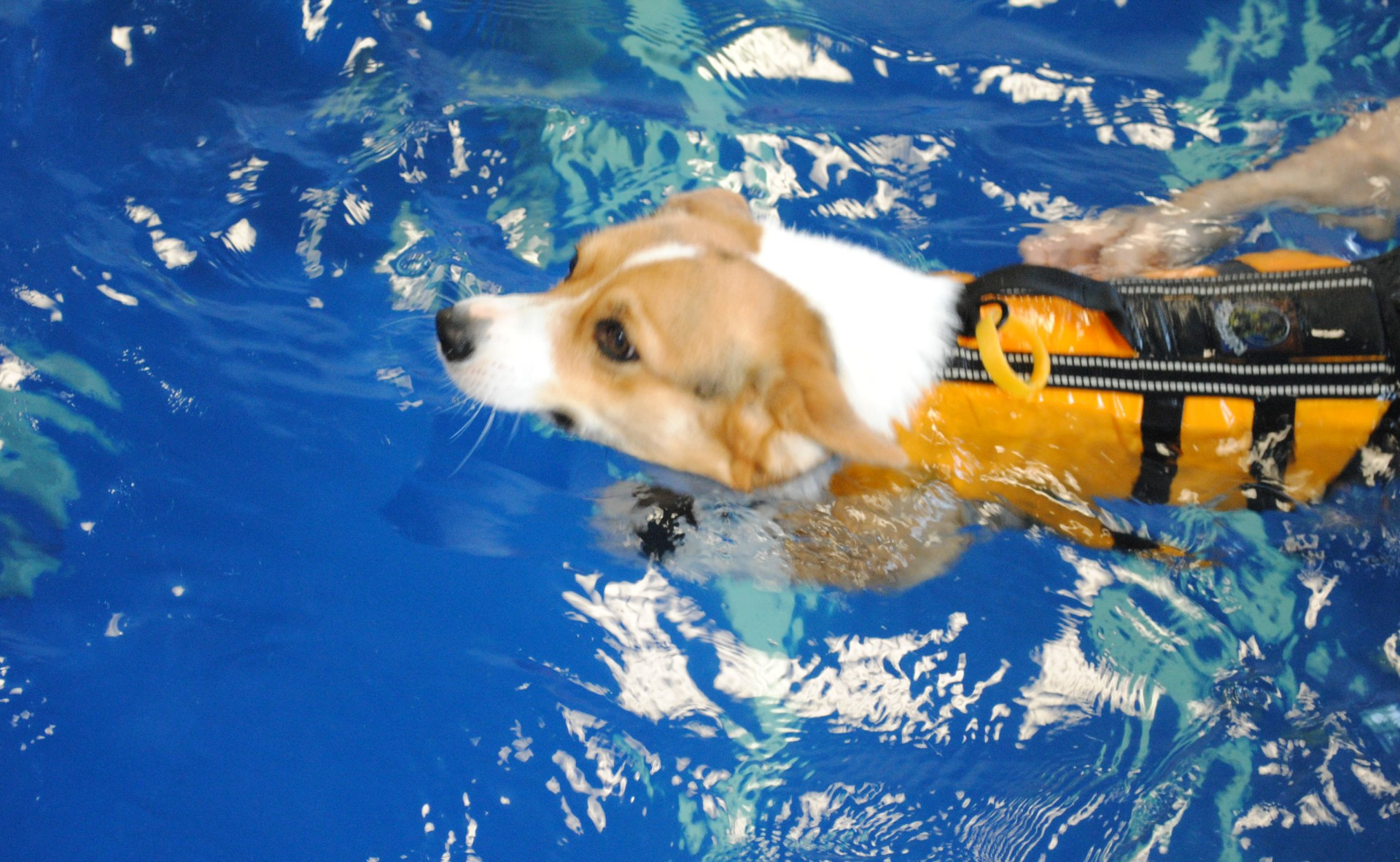 Riverside Rehab Swimming Dogs